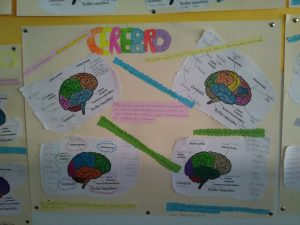 La semana del cerebro