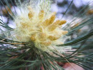 ¿Eres alérgico al polen? Sigue estos consejos de nuestros Gabinete Médico